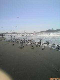 海岸でバーベキュー