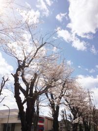 Img_3668_fotor